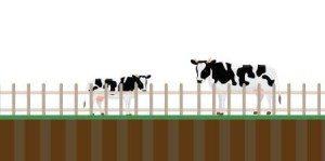Sistema Bull Pecuária